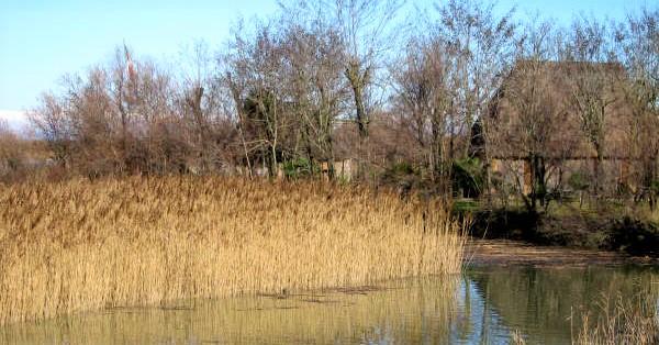 Casoni Valle Vecchia